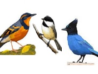 Basic Birding Class with Portland Audubon, Nadaka Nature Park: Thu May 21, 2015 6:30PM-8PM. Info here!