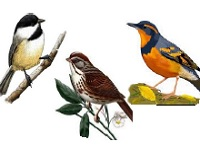 Birding Walk with Portland Audubon, Nadaka Nature Park: Sat May 23, 2015 10AM-11AM. Info here!