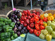 Gresham Farmers Market 2020: Sat, Sep 19, 2020 8:30AM-2PM. Saturday's thru October. Info here!