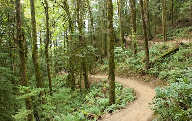 City of Gresham Senior Healthy Hikers, Pearl District to Pittock Mansion Walk: Tue, Nov 26, 2019 9AM-5PM. Let's Go Walking! Info here!